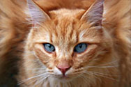 MeadowSweet Pet Care and Boarding is located in beautiful Wilmington North Carolina.  We care for your cats and kittens like they were our own.